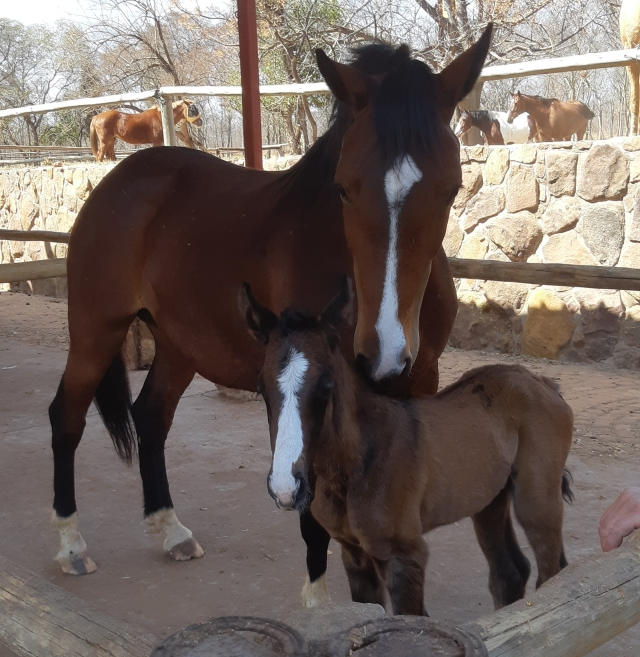 Two Delta and her foal